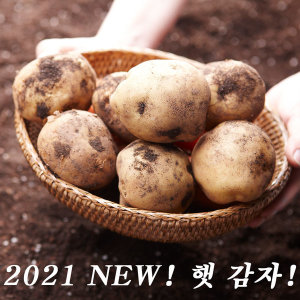 포슬포슬 햇 수미감자 5kg 대 (찜용) 2021년 햇감자