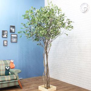 다양한 종류의 자작나무  과일나무 꽃나무 느티나무