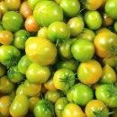 생생스토리 토마토 대저 토마토 2.5kg 랜덤과