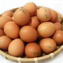 계란 구운계란 대란 30알x12판 몸짱 베스트 식품