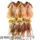 오징어 마른오징어 건오징어 20마리(약2kg) 동해안發