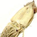 피데기 오징어 반건조오징어 10마리(약800g)동해안發