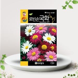 로빈손국화씨앗 70립 국화꽃 꽃씨앗 혼합종