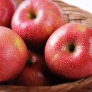 제철 과일 햇 사과 10kg (쥬스용/크기랜덤/품종랜덤)