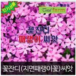 지면패랭이씨앗 필수 패랭이꽃 잇템 꽃잔디 (300알)