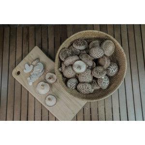 하진이네버섯뜰에 무농약 생표고버섯 파지 1kg