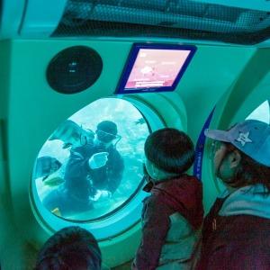 제주 서귀포잠수함+점보빌리지 코끼리테마쇼|제주여행