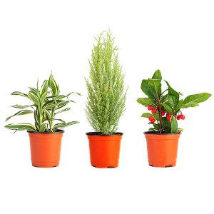 실내공기정화식물 관엽 모종식물 플랜테리어 반려식물