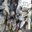 국내자연산왕바지락 잠수부생산 왕바지락1kg해감바지락