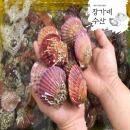 산지직송 장가네수산 통영 홍가리비1kg/관자 구이