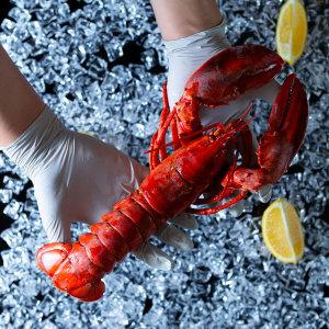 활랍스터 1kg~1.1kg 해저도시