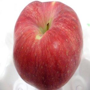 꿀먹은꿀사과 햇부사 출하중  세일중 9kg