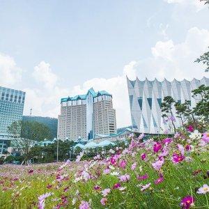 하이원 그랜드 호텔 메인타워(강원 호텔/정선/평창/횡성)