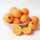 블랙라벨 오렌지 썬키스트 고당도 중소과 113과 17kg