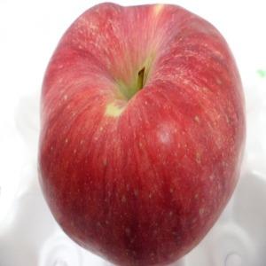 사과 안동사과 9~10kg중과+중대과혼합23900원(흠과)