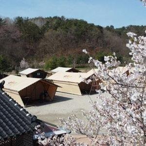 부여굿뜨래웰빙마을 글램핑코리아(충남 캠핑/글램핑/부여/충청권)