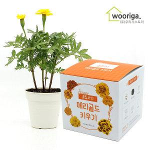꽃집사 메리골드 미니화분키우기 꽃 새싹 화초 텃밭