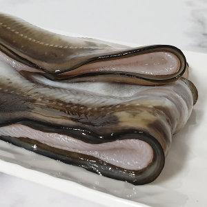 통영 자연산 바다장어 1kg(2-4마리)