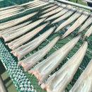 최상급자연산 통영 해풍 반건조 바다장어1팩(중소/8미)