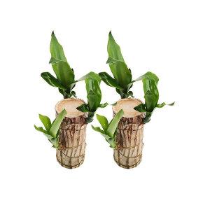 1+1 공기정화식물/꽃/허브/다육/구매수량별사은품
