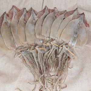 오징어 마른오징어 건오징어 10마리 약500g 동해안