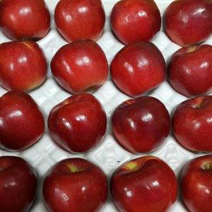 홍옥 안동 사과 5kg / 홍옥사과
