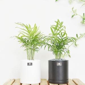 세라믹 무광 원형 화분 실내공기정화식물 세트