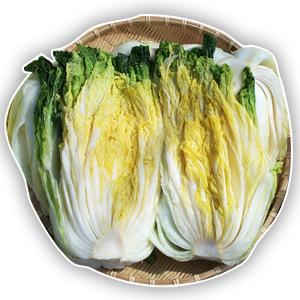 우리농장 절임배추 20kg 직접 재배 김장예약 연중판매