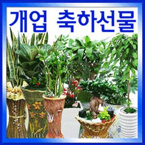 공기정화식물/산세베리아 행운목 금전수/개업승진취임