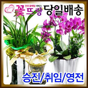 동양란서양란 승진선물취임개업이전/전국꽃배달서비스