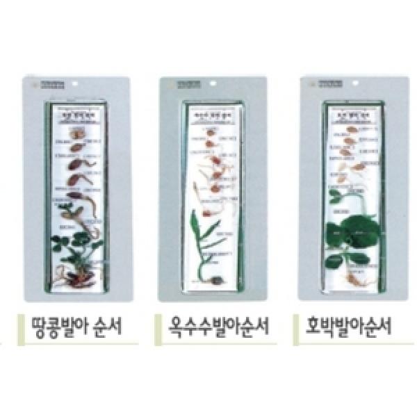 투명경질아크릴수지제품-호박발아순서/SDS-3308