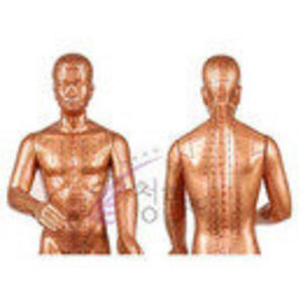 황금동인형(한국표준침구동인)/인체모형/황동모형