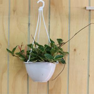 가꾸지오 공기정화식물/걸이화분/식물/미니화분/장식