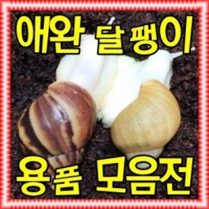 애완 달팽이 키우기 코코피트 흙 톱밥 사료 먹이 칼슘