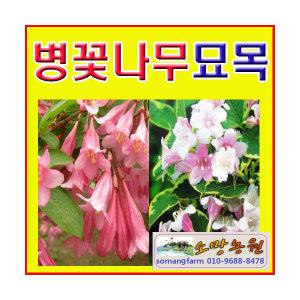 GZ[소망S농원]병꽃나무 묘목/키100센치 4그루 묶음/선택형/꽃의 모양이 병모양과 비슷하여 병꽃나무/인기