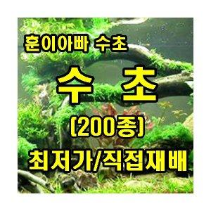 경기도/용인/수초/희귀/초보/수족관/어항/자작이탄