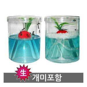 애완곤충-개미키우기/곤충사육장/개미집/사슴벌레세트