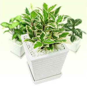 공기정화식물/구문초 /화분/다육/꽃