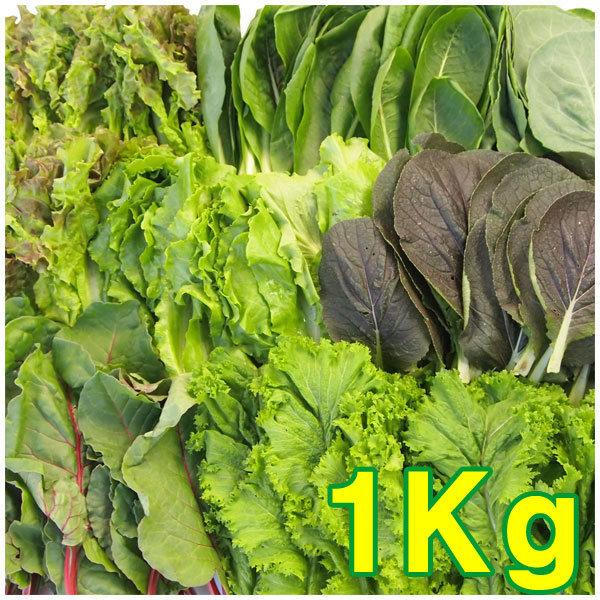 유기농 모듬쌈 쌈채소 1Kg / 산지직배송