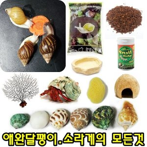 애완 달팽이 소라게 사료 먹이 용품 쉘 흙 코코피트