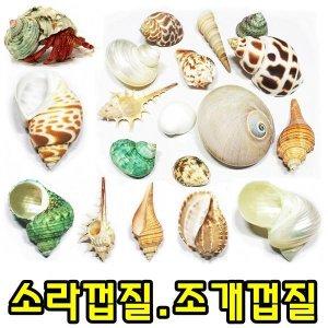 소라게/쉘/껍데기/소라껍질/사료/먹이/용품/젤리/