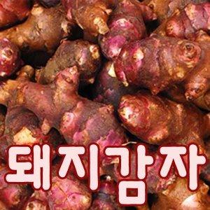 2018년 10월 수확 햇 자색 돼지감자 생과 10kg특가