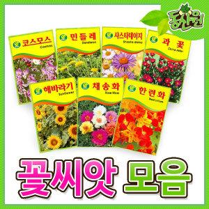 씨앗모음 꽃씨 씨앗 꽃씨앗 해바라기 코스모스 과꽃