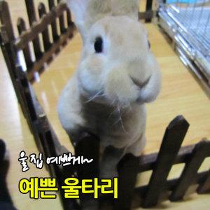 고급조립 애견울타리/실내정원/애견집/애완/철장/화단