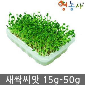 새싹 씨앗/베이비 씨앗/보리 밀 케일/브로콜리/무순
