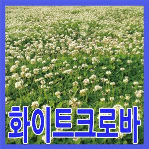 화이트크로바씨앗/1kg/약40평/야생화/개화기6~7월