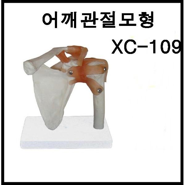 미래메디쿠스 4D어께관절 모형 XC-109 실습모형