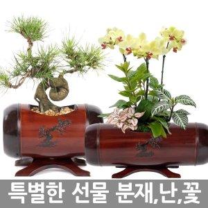 난 분재 축하화분 꽃배달 동양란 승진 취임 개업 화분
