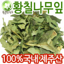 청정완도산 건조 황칠나무잎 100g/ 황칠잎 황칠나무