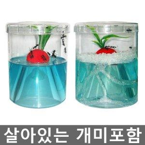 개미키우기-개미집 애완곤충 어린이선물 과학교구